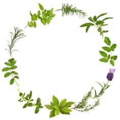 מעגל צמחי מרפא