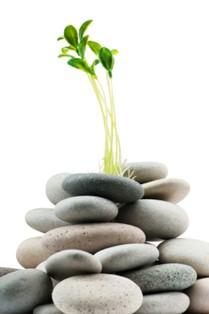 שלווה וטבע - חלק חשוב ברפואה הסינית